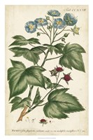 Chambray Botanical I Fine-Art Print