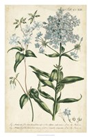 Chambray Botanical II Fine-Art Print