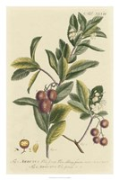Miller Foliage & Fruit I Fine-Art Print