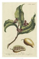 Miller Foliage & Fruit II Fine-Art Print