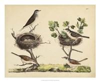 Wrens, Warblers & Nests I Fine-Art Print