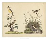 Wrens, Warblers & Nests II Fine-Art Print