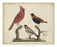 Cardinal & Grosbeak Fine-Art Print
