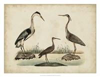 Common Heron & Crested Purple Heron Fine-Art Print