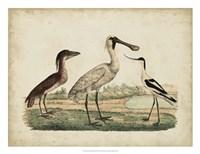 Avocet & Boat-Billed Heron Fine-Art Print