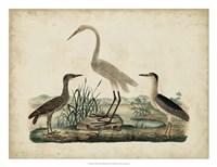 Great White Heron & Night Heron Fine-Art Print