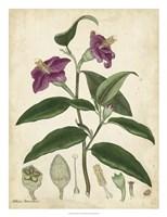 Antique Hibiscus Fine-Art Print