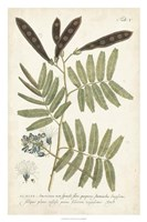 Miller Ferns I Fine-Art Print