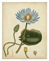 Blue Water Lily Fine-Art Print
