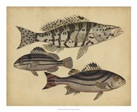 Species of Fish I Fine-Art Print