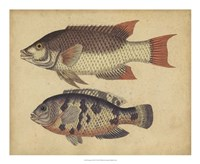 Species of Fish IV Fine-Art Print