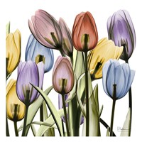 Tulipscape Fine-Art Print