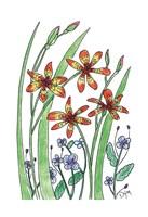 Blackberry Lily Framed Print