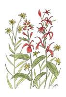 Cardinal Flower Fine-Art Print