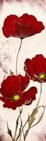 Red Look Fine-Art Print