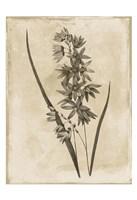 Floral Earthtone Fine-Art Print