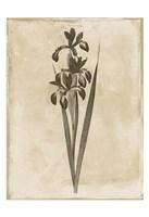 Floral Earthtone Two Fine-Art Print
