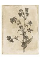 Floral Earthtone Three Fine-Art Print