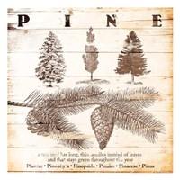 Pine Fine-Art Print