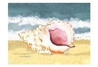 Seashell II Fine-Art Print