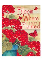 Bloom Where You Are Planted Fine-Art Print
