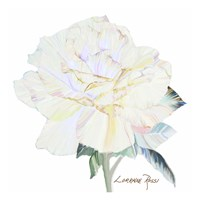 Peace Rose 1 Fine-Art Print