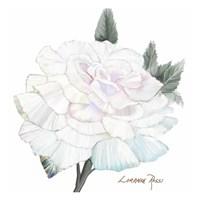 Peace Rose 2 Fine-Art Print