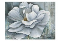 Silken Bloom II Fine-Art Print