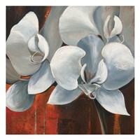 Pearl Orchid I Square Fine-Art Print