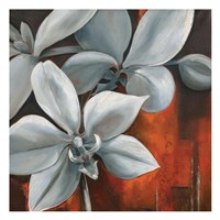 Pearl Orchid II Square Fine-Art Print
