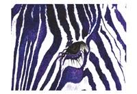 Blue Zebra Fine-Art Print