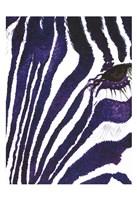 Blue Zebra Mate Fine-Art Print