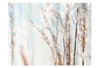 Blue Grasses Fine-Art Print