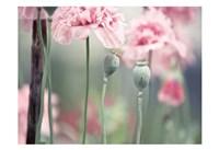 Poppy Pink Fine-Art Print