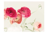 Spring Rannys Fine-Art Print