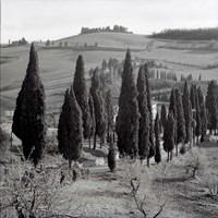 Tuscany IV Fine-Art Print