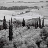 Tuscany VI Fine-Art Print