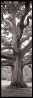 Hampton Field Tree II Fine-Art Print