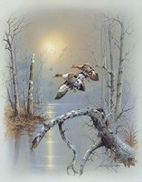 Ducks D Fine-Art Print