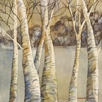 Birch Fine-Art Print