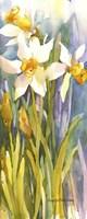 Narcissus Fine-Art Print