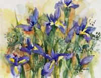 Indelible Irises Fine-Art Print