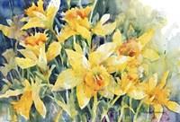 Daffodil Party Fine-Art Print