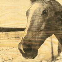 Portrait of a Horse Fine-Art Print
