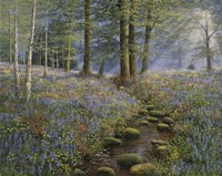 Bluebell Wood Fine-Art Print