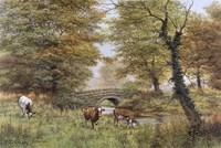 Cows By Bridge Fine-Art Print