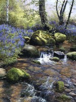 Shallow Brook Fine-Art Print