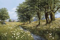 Beeches And Daisies Fine-Art Print