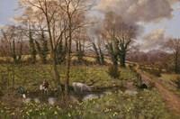 Cattle And Daffodils Fine-Art Print