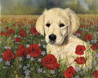 Puppy And Poppies Fine-Art Print